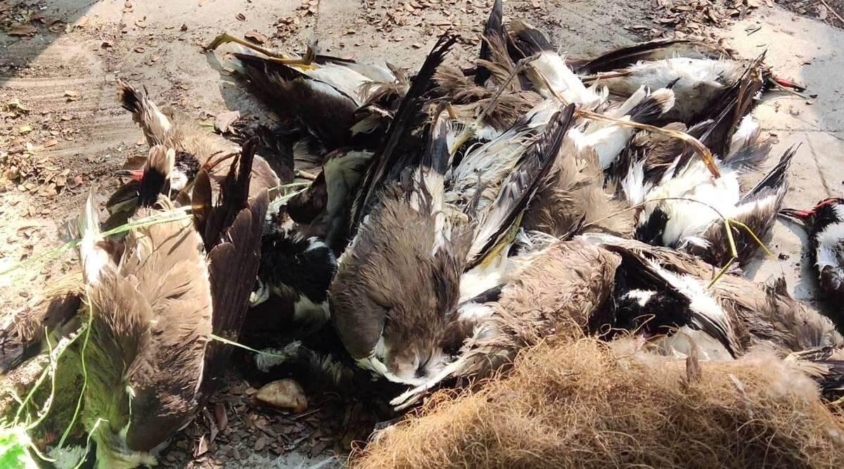 Avian Flu outbreak